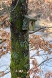非常在地衣和青苔盖的老嵌套鸟箱子,垂悬在一棵树在春天 免版税库存图片