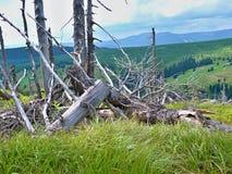 非常在山的老树 免版税库存照片