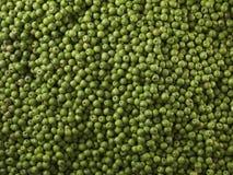 非常大小组绿色苹果 格兰尼史密斯苹果 库存图片