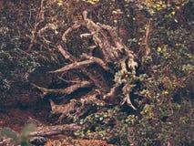 非常奇怪的树 免版税库存图片