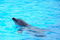 非常愉快的海豚 免版税库存图片