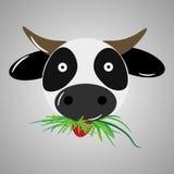 非常扔石头的母牛 免版税库存照片
