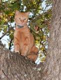 非常担心的看起来的橙色虎斑猫 免版税库存照片