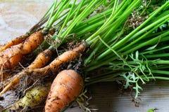 非常接近的观点的与根和上面的新鲜的嫩胡萝卜 图库摄影