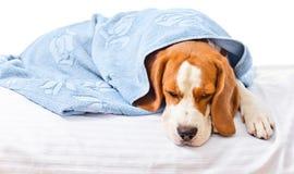 非常病的狗 免版税库存照片