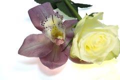 非常相当与玫瑰和水下落的五颜六色的兰花 库存图片