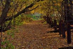 非常秋天山毛榉多云蕨照明设备天空软的线索 图库摄影