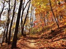 非常秋天山毛榉多云蕨照明设备天空软的线索 库存照片