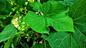 非常罕见的植物 库存图片