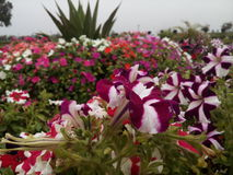 非常美丽的花园 库存图片