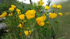 非常美丽的黄色花 库存图片
