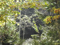 非常美好的光通过一棵核桃树的叶子在秋天 库存照片