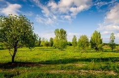 非常美好的夏天风景 在一个领域的树与黑暗的云彩 库存照片