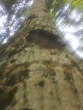 非常美好的椰子树图象 免版税库存照片