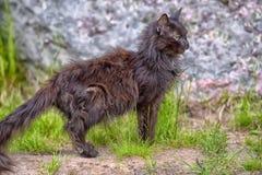 非常老病残被憔悴的猫 免版税库存照片