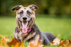 非常老阿尔萨斯人微笑的在秋天看照相机的秋天叶子 免版税库存照片