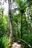 非常耸立在新的Zealnd的thre土地上的高大的树木 图库摄影