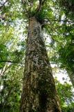 非常耸立在新的Zealnd的thre土地上的高大的树木 库存照片