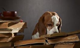 非常聪明的狗 免版税库存图片