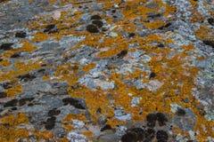 非常背景详细实际石头 与黄色青苔的自然纹理 库存照片