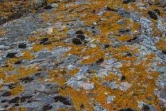 非常背景详细实际石头 与黄色青苔的自然纹理 库存图片