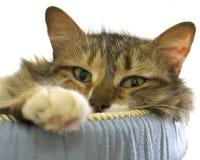 非常舒适的猫 免版税库存图片