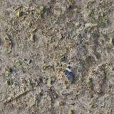 非常英亩地面和土的详细的无缝的纹理样式在高分辨率 库存照片