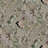 非常英亩地面和土的详细的无缝的纹理样式在高分辨率 免版税库存照片