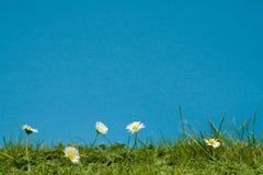 非常被保留的草坪 免版税库存图片