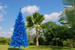 非常规的蓝色圣诞树在有棕榈树和山的在背景中,蓝色颜色概念绿色热带庭院里 免版税库存照片