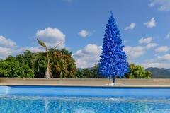 非常规的蓝色圣诞树在有游泳池的绿色热带庭院里 免版税库存照片