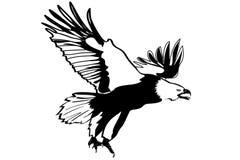 非常详细老鹰例证 免版税库存照片