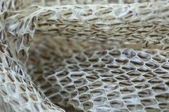 非常长期在木地板上的白色流洒的蛇皮 图库摄影