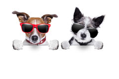 非常靠近两条的狗 免版税库存照片