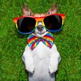 非常滑稽的快乐狗 免版税库存照片