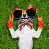 非常滑稽的快乐狗 免版税库存图片