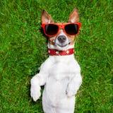非常滑稽的狗 库存图片