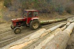 非法的砍伐森林 免版税库存照片