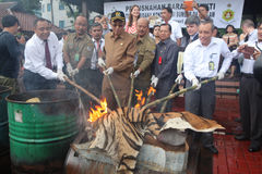 非法野生生物贸易在印度尼西亚 免版税库存照片