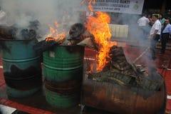 非法野生生物贸易在印度尼西亚 库存图片