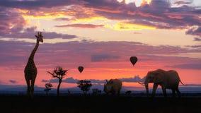 非洲与动物的徒步旅行队五颜六色的日出 图库摄影