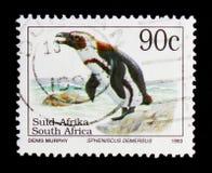非洲企鹅蠢企鹅demersus, Definitives危及了Animalsserie,大约1995年 库存图片