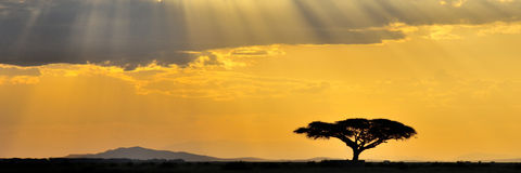 非洲全景日落 免版税库存图片
