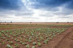 非洲农业的领域在卡宾达市 安格斯 免版税图库摄影