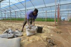 非洲农夫 免版税图库摄影