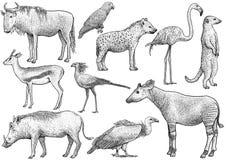 非洲动物收藏,例证,图画,板刻,墨水,线艺术,传染媒介 向量例证