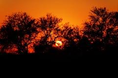 非洲南日落 免版税图库摄影