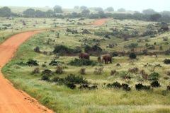 非洲南路的徒步旅行队 库存照片