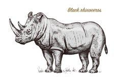 非洲在白色背景的犀牛野生动物 被刻记的手拉的线艺术葡萄酒老单色剪影,墨水 库存例证