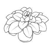 非洲堇花的传染媒介例证 图库摄影